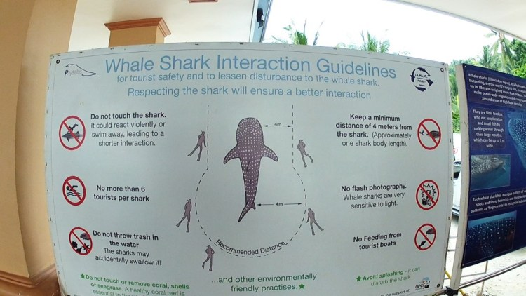 Whale Shark ineraction guide
