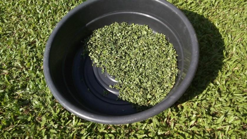 Food mulug leaves drying