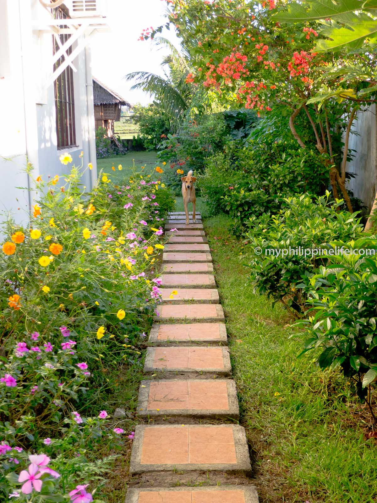 landscaping philippine home