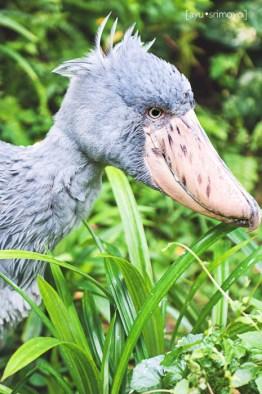 Jurong Bird Park ,Singapore
