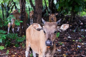 MPYH_2017_Indonesia_Komodo National Park_0015