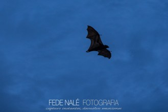 MPYH_2017_Indonesia_Komodo National Park_0087