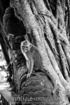 MPYH_2017_Indonesia_Ubud_Monkey Forest_0004