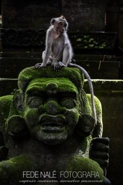 MPYH_2017_Indonesia_Ubud_Monkey Forest_0007