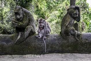 MPYH_2017_Indonesia_Ubud_Monkey Forest_0016