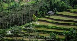 MPYH_2017_Indonesia_Viaje a Pemuteran_0004