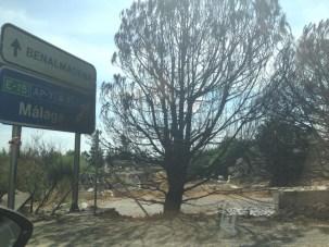 Ausgebrannter Baum