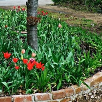 Blooming Bricks and Mortar