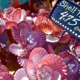 She Sells SeaSHELL FLOWERS by the Seashore …