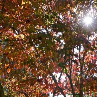 SPLIT PERSONALITY:  Seasons of Life