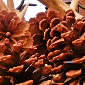 HOW TO CLEAN PINECONES: Authentic Blogging Gets Dirty