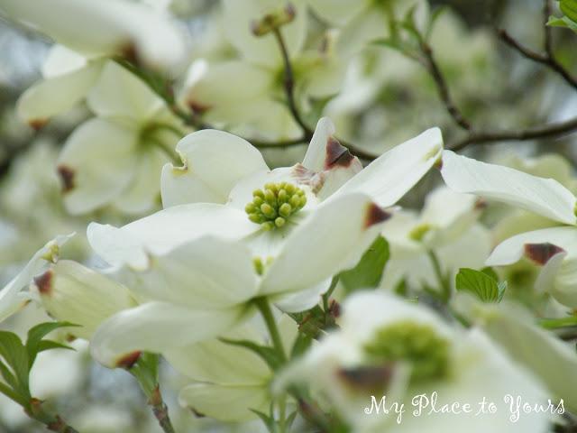 Spring+Flowers.1