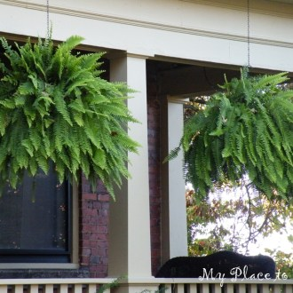 How to have hanging ferns that are the envy of the neighborhood:  Part 2