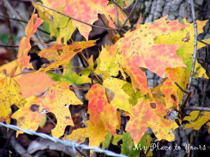 TN Autumn01