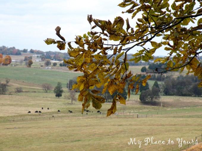TN Autumn02
