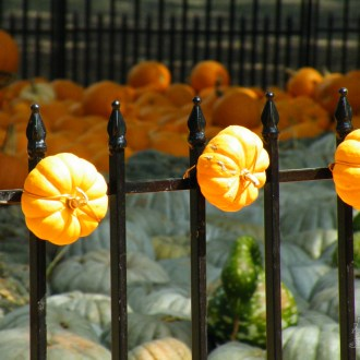 For the love of pumpkins…