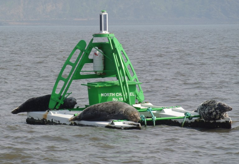 Three seals sunning themselves on a green buoy in the Firth of Forth.