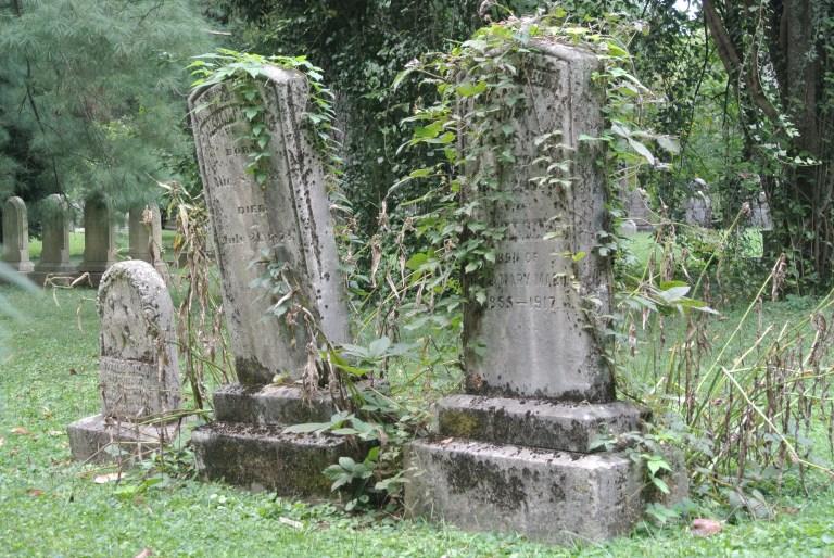 Three old overgrown gravestones.