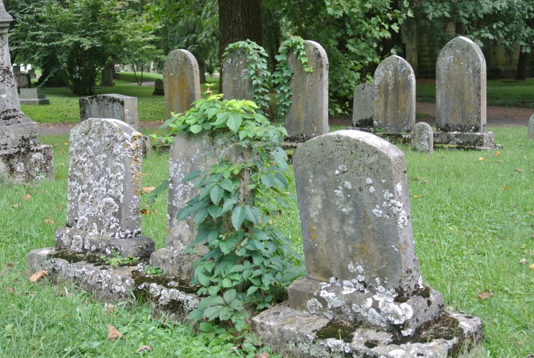 Old stone gravestones covered in lichen and vines.