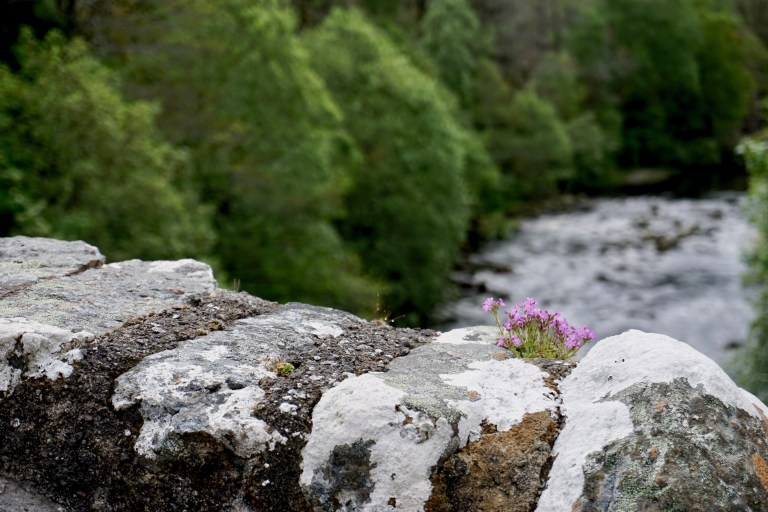 Bridge wall with a purple flower and the River Fechlin.