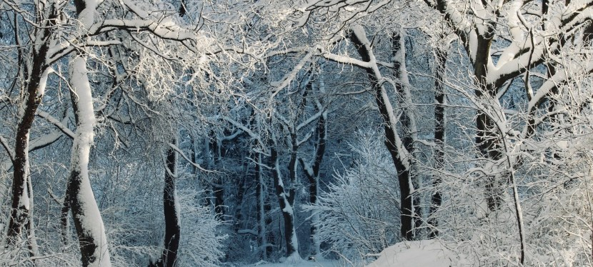 """Stopping by Woods on a Snowy Evening""-Robert Frost"