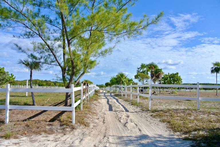 A white fence, a sandy island road, and palm trees.