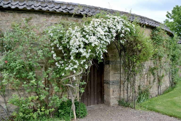 White flowers growing on an arch over a garden door.