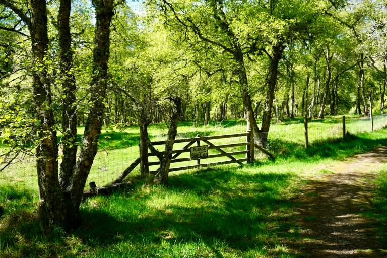 A walking path and a farmer's gate.