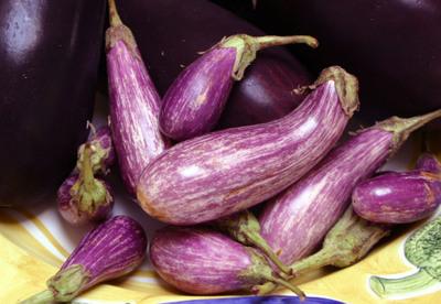 Eggplant_009