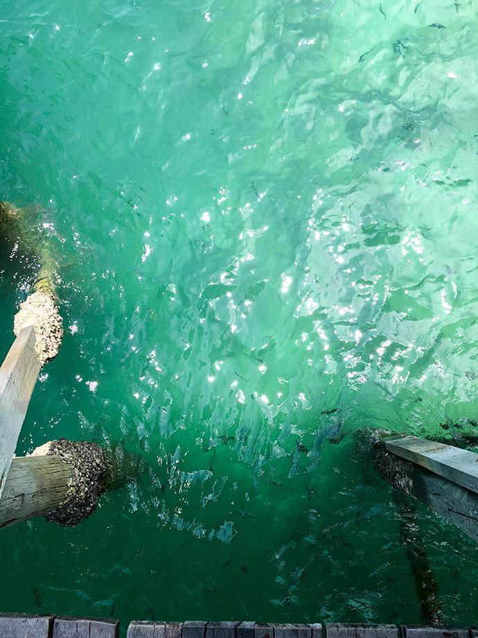 fish in water off pier