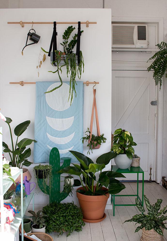 cool cactus gift shop plants armadale melbourne mypoppet.com.au