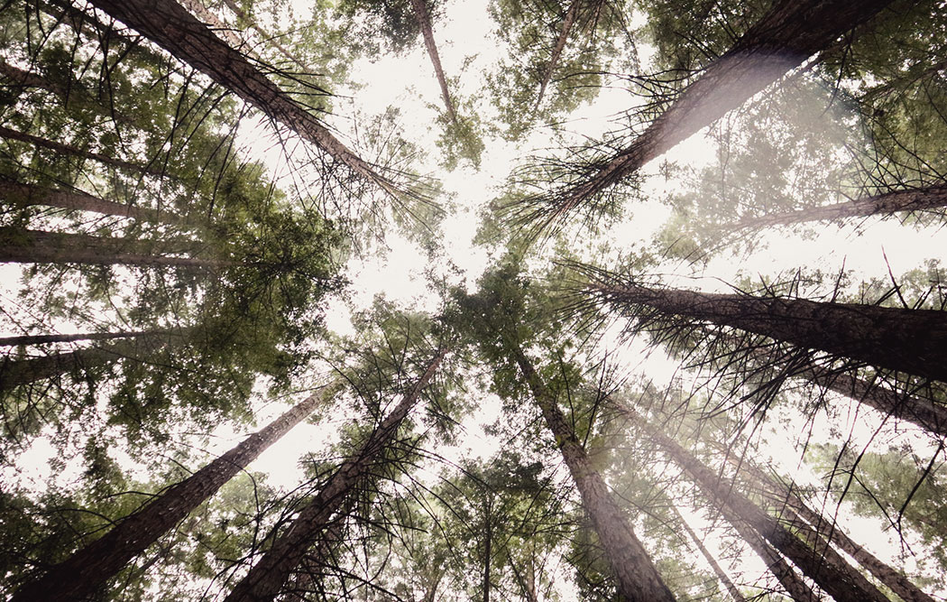 There's a Magical Redwood Forest in Warburton