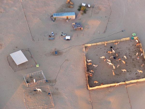Hot air ballooning in dubai - camel farm Mypoppet.com.au