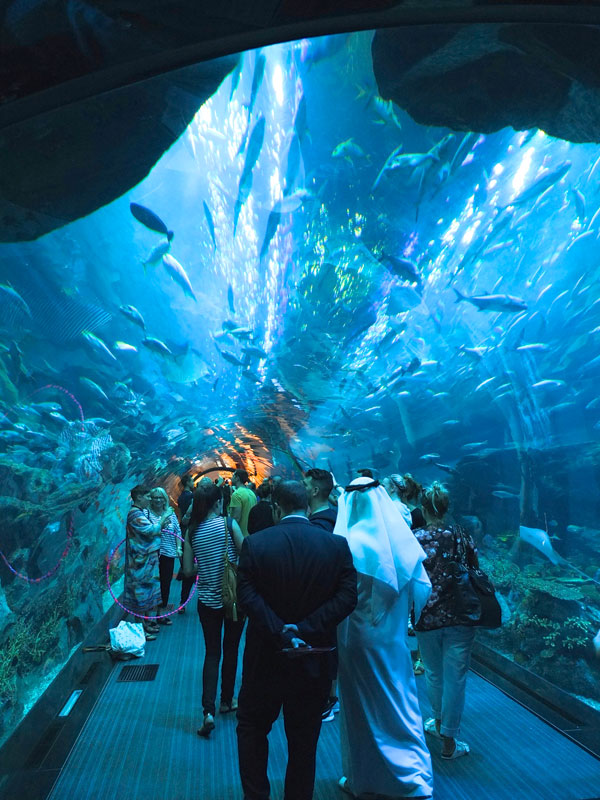 Dubai mall aquarium tunnel