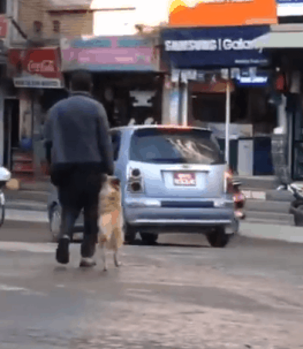 Woman records dog holding his owner's hand while crossing.