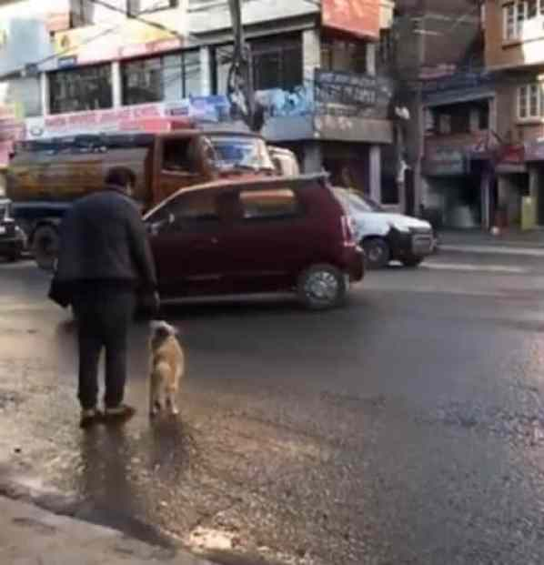 Dog looking at owner's hand waiting for the signal to cross the street.