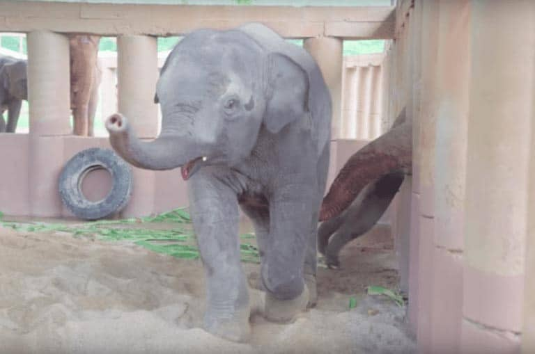 Heartwarming moment herd of elephants run to welcome new orphaned baby elephant