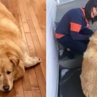 Woman rescued obese dog and helped him lose 100 pounds, see him now