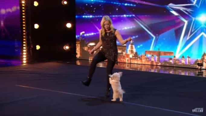 Tiny dog showing her skills on a talent search competition.