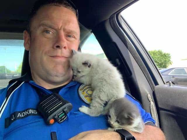 These kittens gave cuddle therapy to the officer who saved their lives