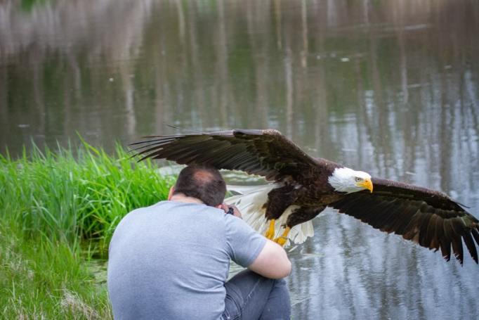 bird-photography-steve-biro-7