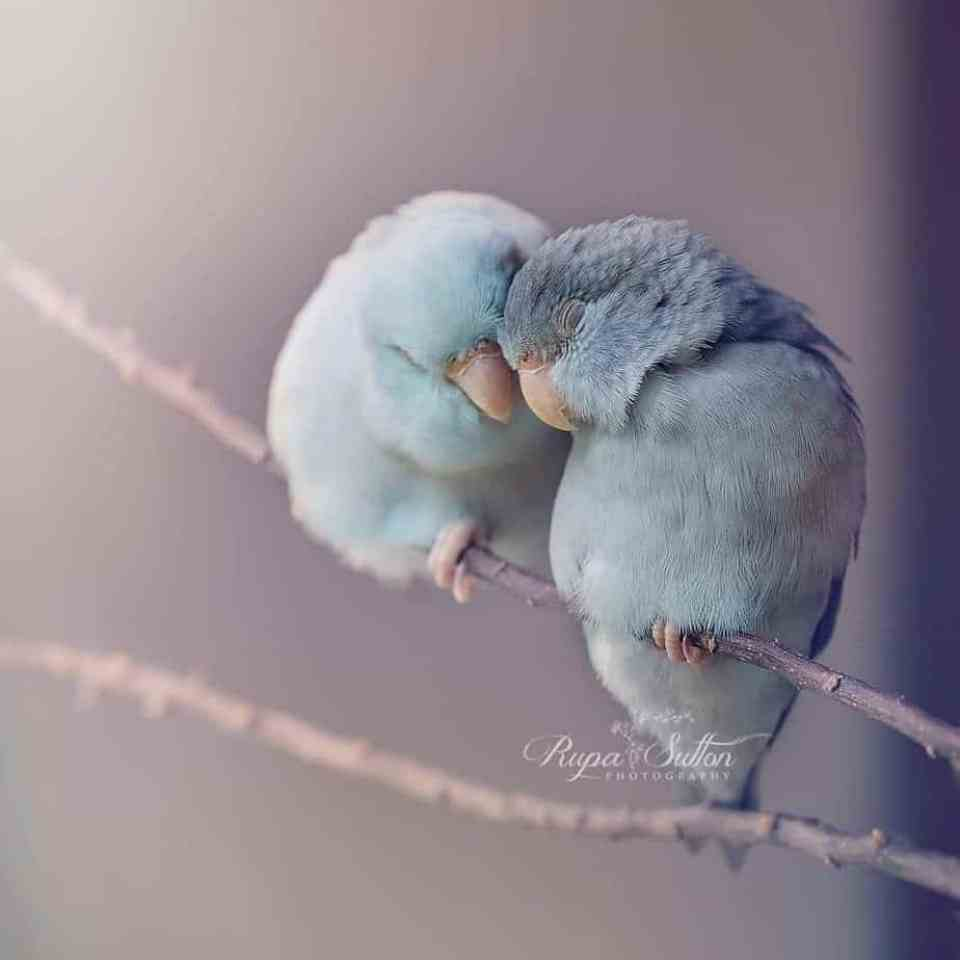 bird-photography-rupa-sutton-1