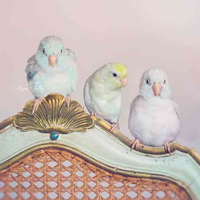 bird-photography-rupa-sutton-12