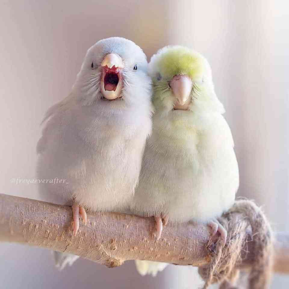 bird-photography-rupa-sutton-3