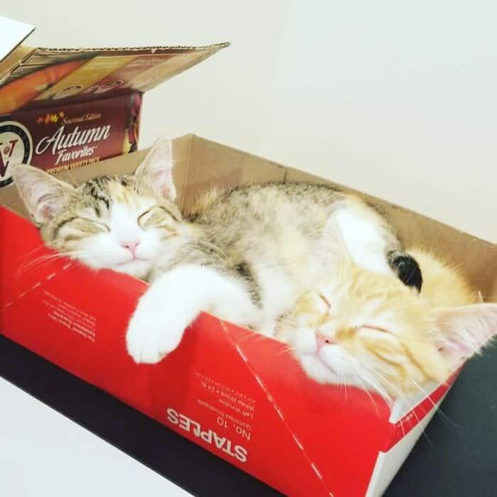 office-kittens-debit-credit-ohio-22-5d1c51b2bbd2b__700