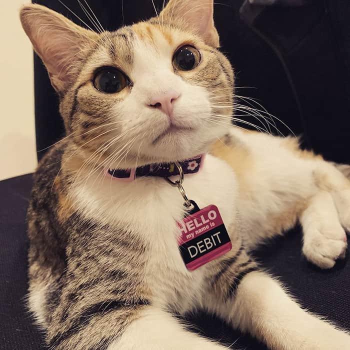 office-kittens-debit-credit-ohio-35