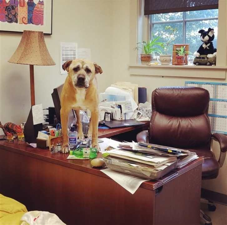 Brutus at the shelter's office