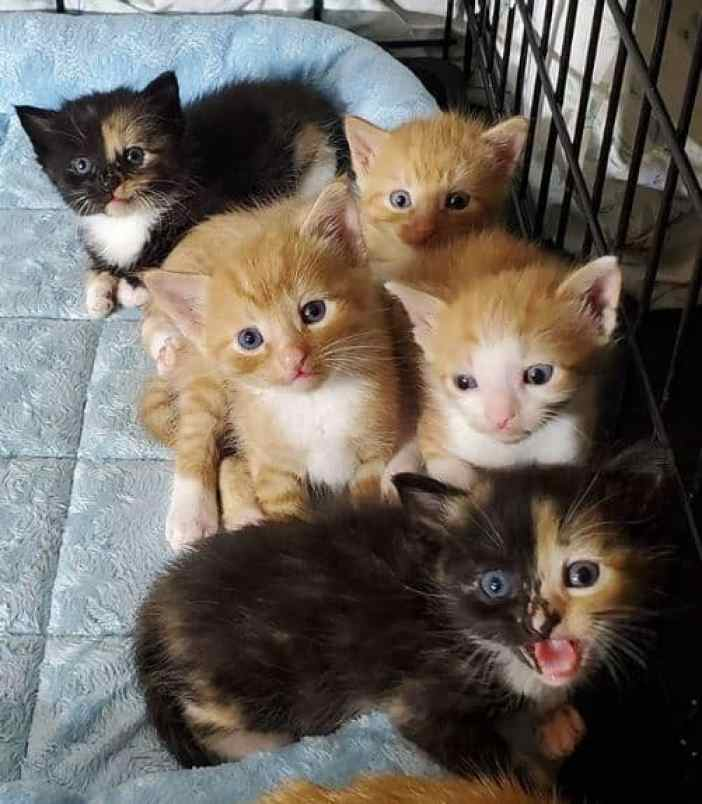 Cats rescued by Paul the Cat Guy after learning a class from the APSCA