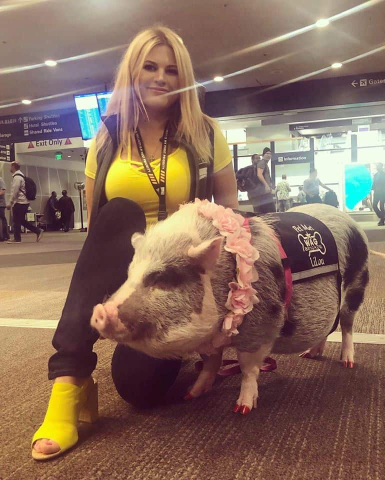 The cutest therapy pig to ease your anxiety away.