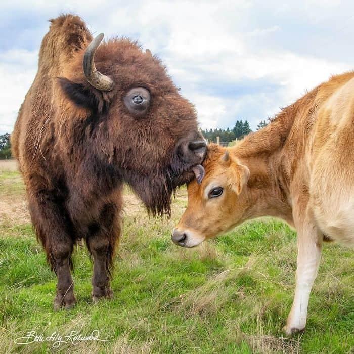 Meeting her best-friend in a farm sanctuary.